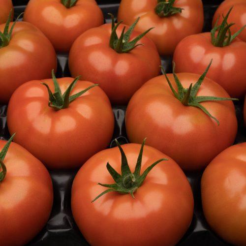 Diciocco Farms Photos Web Res-182